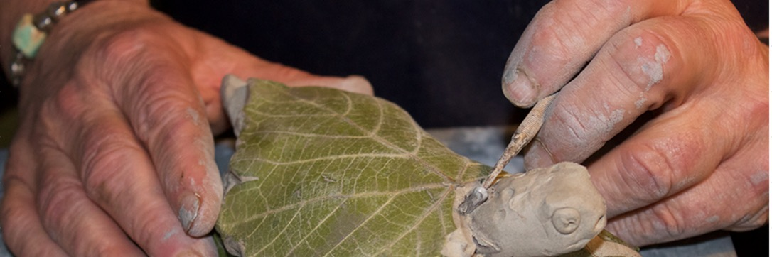 Naissance tortue des vignes pour spiler