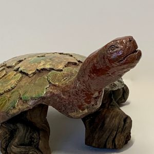 Tortue Gaillacoise